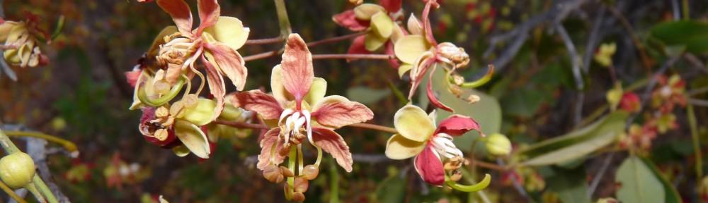Myall Park Botanic Garden